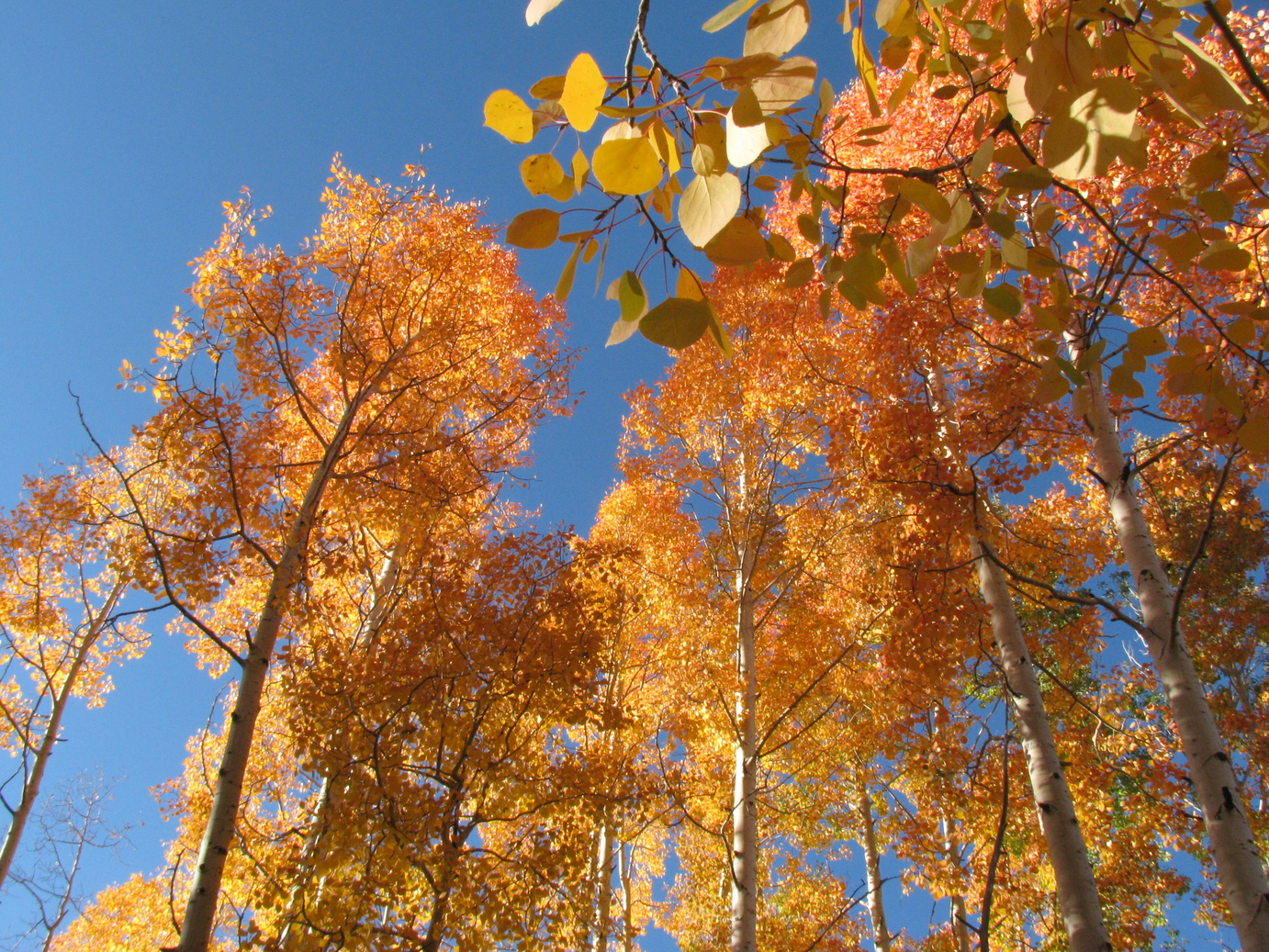 Durango Colorado Fall Colors